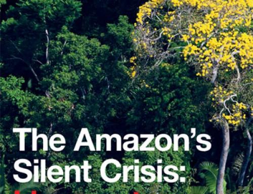 Greenpeace denuncia la entrada de madera ilegal procedente de la destrucción de la Amazonía