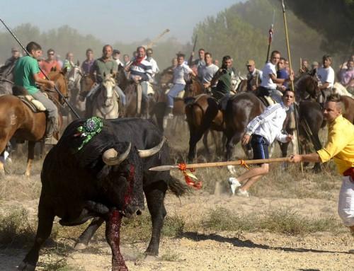 La prehistoria de los garrulos de Tordesillas pasó a la historia